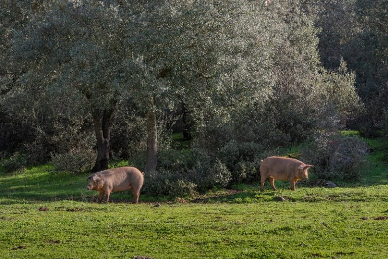 Wildtiere im Wald am Seniorenheim in Müllrose
